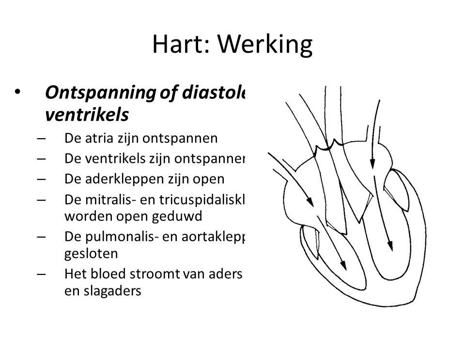 Hart: Werking Ontspanning of diastole van de ventrikels