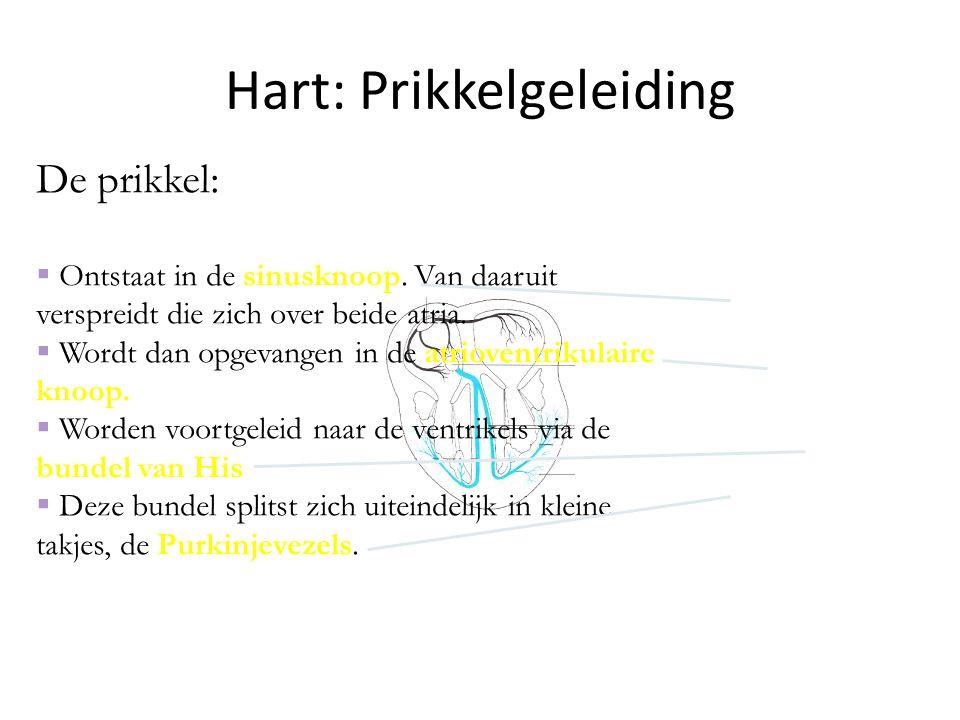 Hart: Prikkelgeleiding