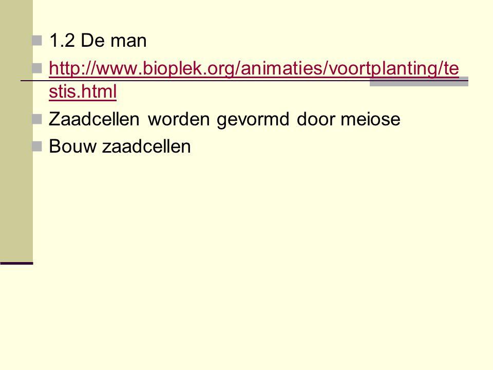 1.2 De man http://www.bioplek.org/animaties/voortplanting/testis.html. Zaadcellen worden gevormd door meiose.