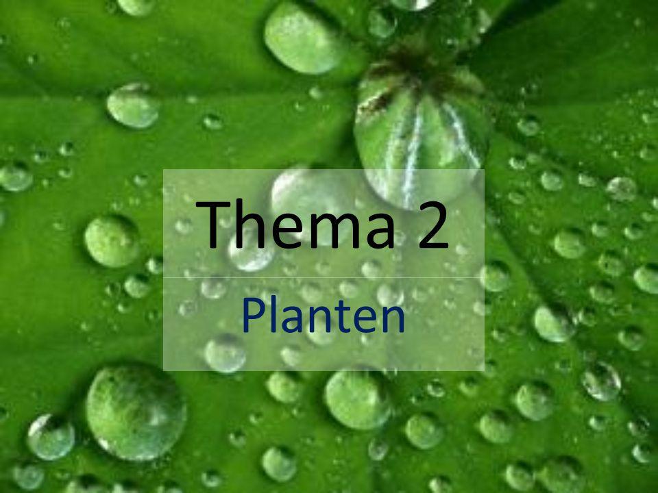 Thema 2 Planten