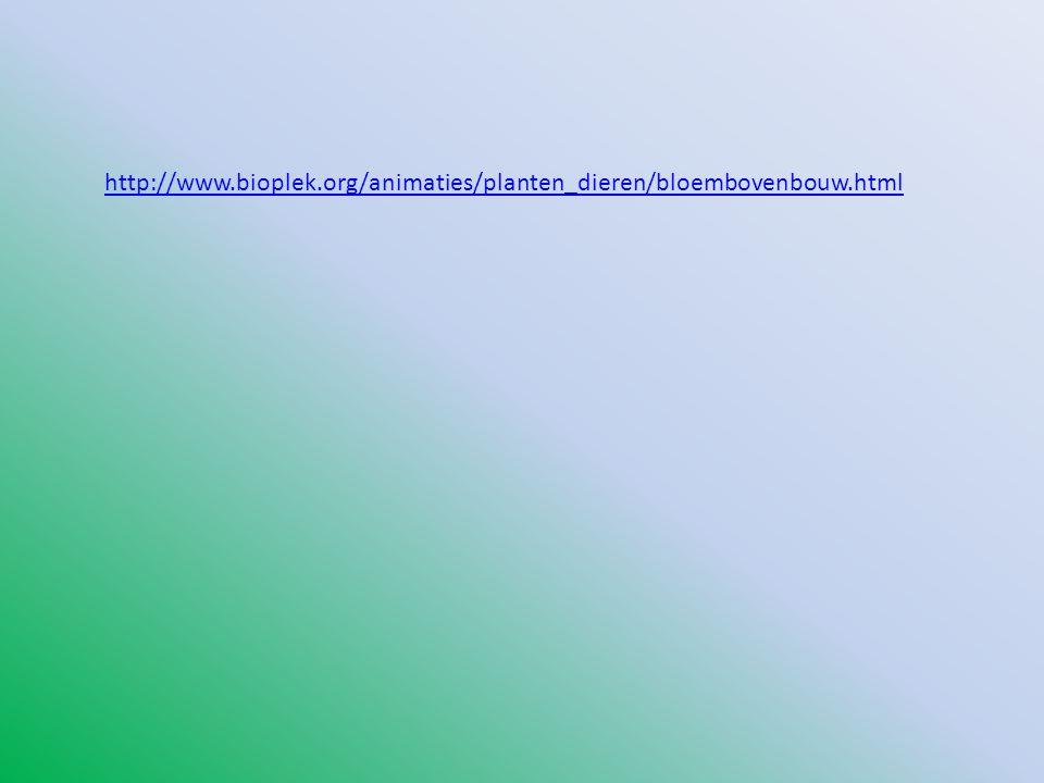 http://www.bioplek.org/animaties/planten_dieren/bloembovenbouw.html