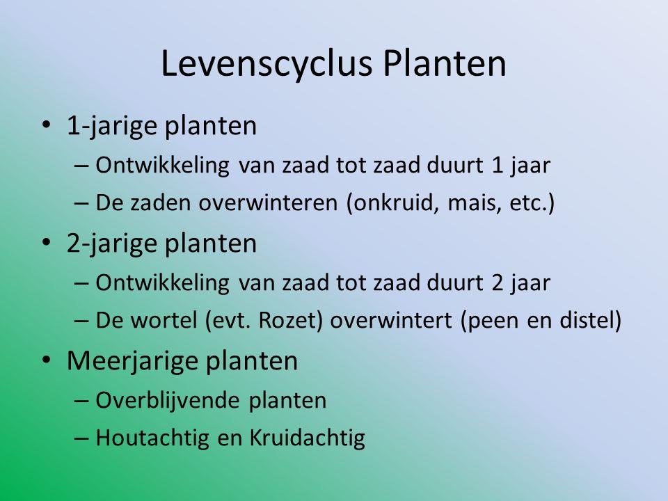 Levenscyclus Planten 1-jarige planten 2-jarige planten