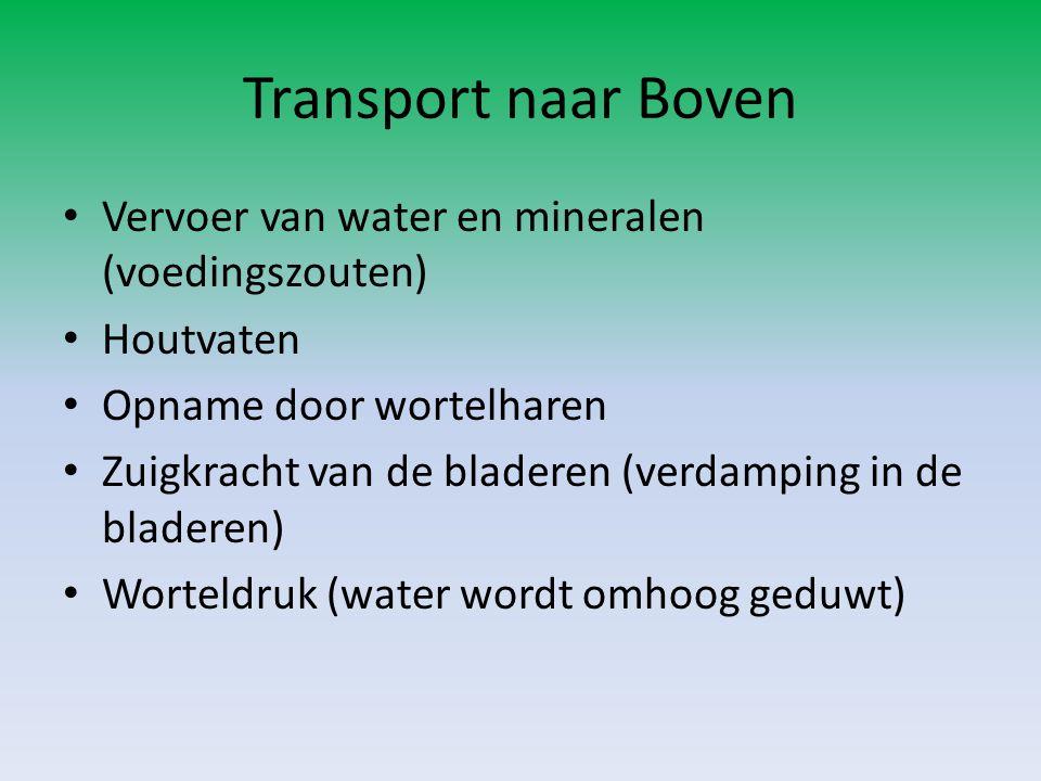 Transport naar Boven Vervoer van water en mineralen (voedingszouten)