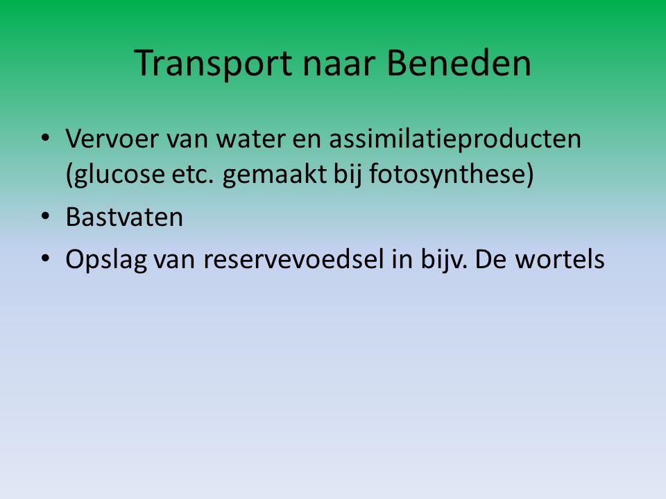 Transport naar Beneden
