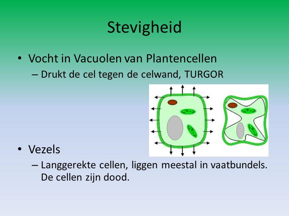Stevigheid Vocht in Vacuolen van Plantencellen Vezels