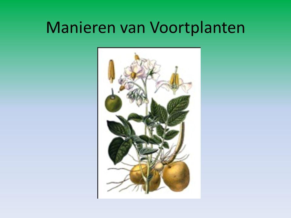 Manieren van Voortplanten