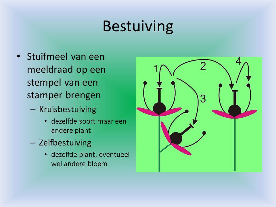 Bestuiving Stuifmeel van een meeldraad op een stempel van een stamper brengen. Kruisbestuiving. dezelfde soort maar een andere plant.