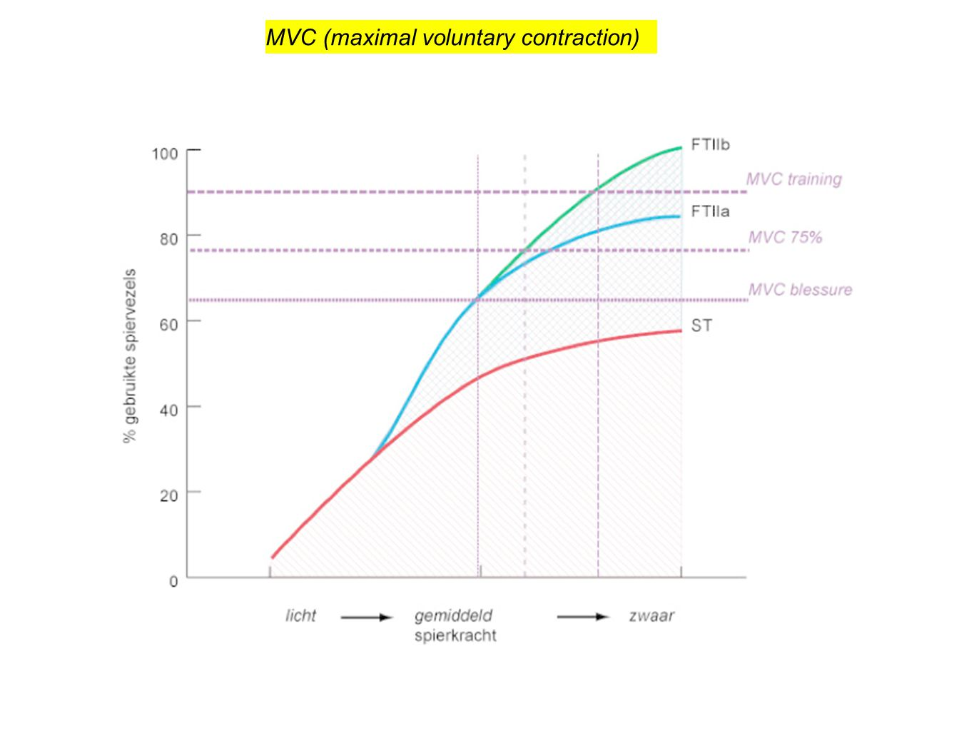 MVC (maximal voluntary contraction)