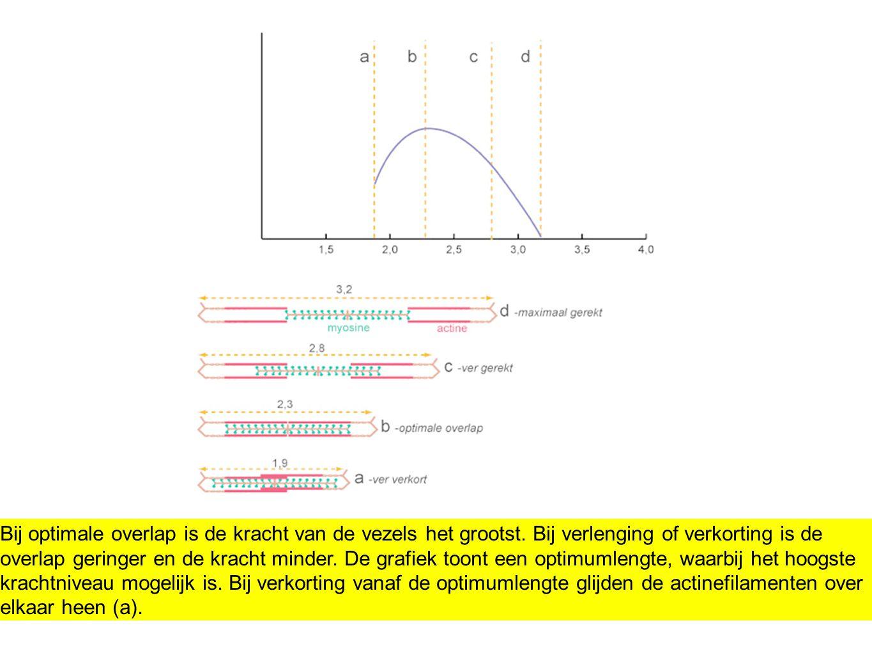 Bij optimale overlap is de kracht van de vezels het grootst