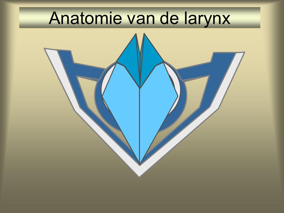 Anatomie van de larynx