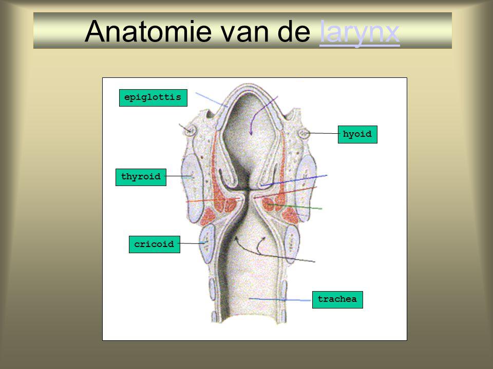 Anatomie van de larynx thyroid epiglottis cricoid trachea hyoid