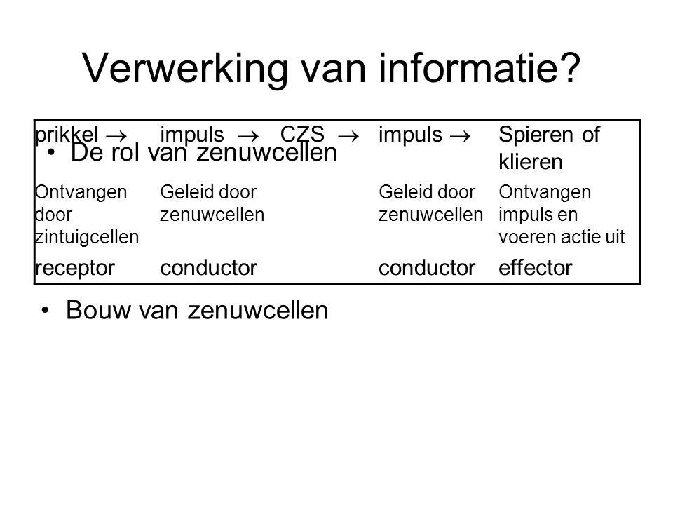 Verwerking van informatie