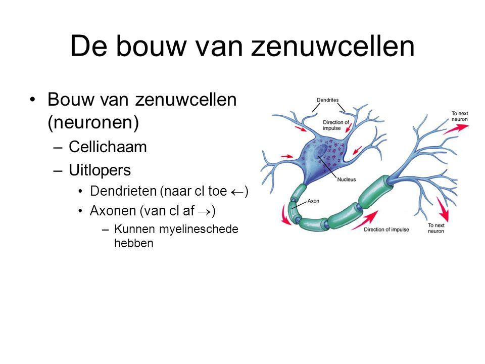 De bouw van zenuwcellen