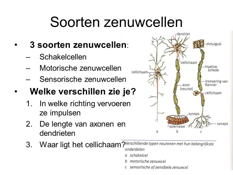 Soorten zenuwcellen 3 soorten zenuwcellen: Welke verschillen zie je
