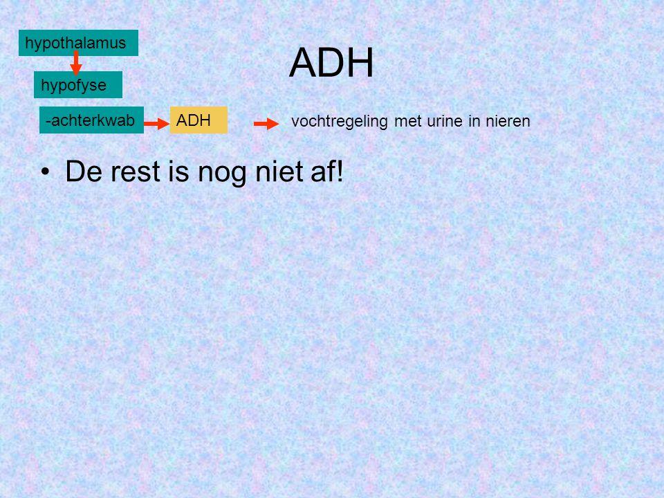 ADH De rest is nog niet af! hypothalamus hypofyse -achterkwab ADH