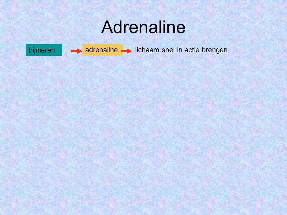 Adrenaline bijnieren adrenaline lichaam snel in actie brengen