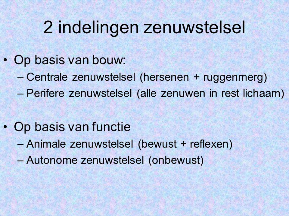 2 indelingen zenuwstelsel