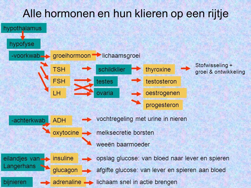 Alle hormonen en hun klieren op een rijtje