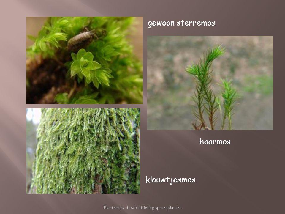 Plantenrijk: hoofdafdeling sporenplanten
