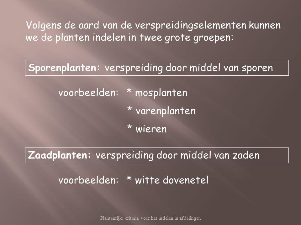 Plantenrijk: criteria voor het indelen in afdelingen