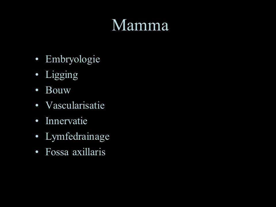 Mamma Embryologie Ligging Bouw Vascularisatie Innervatie Lymfedrainage
