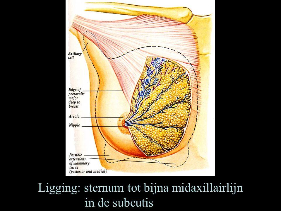 Ligging: sternum tot bijna midaxillairlijn