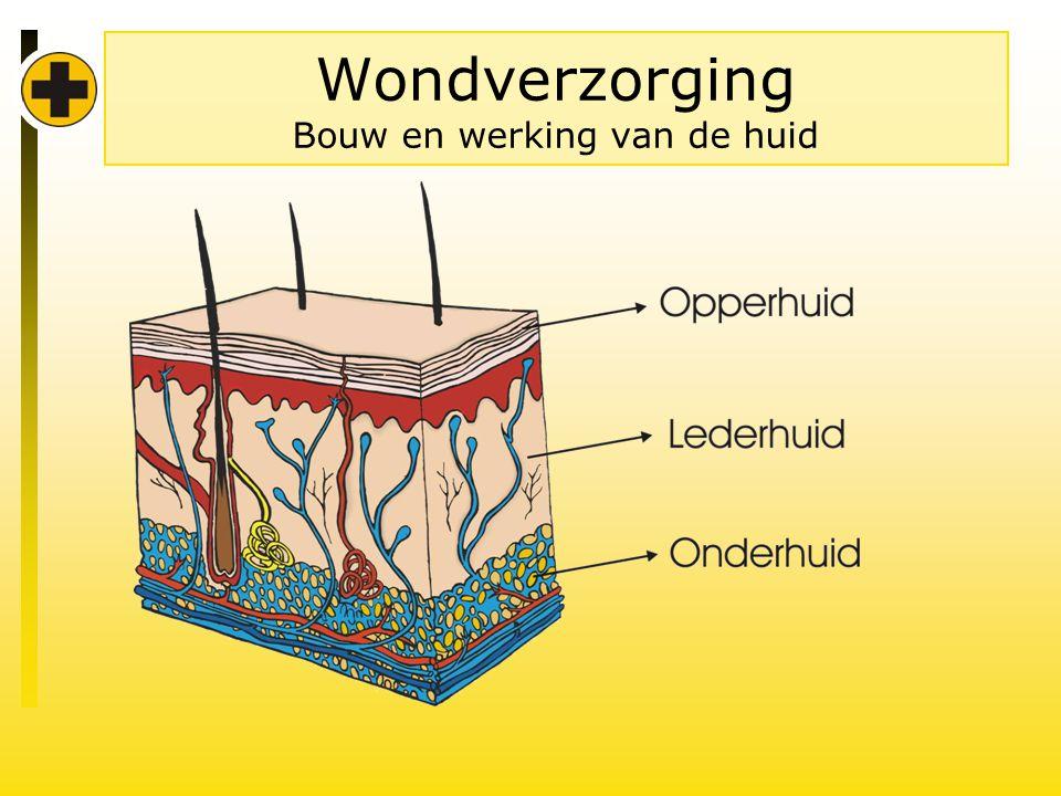Wondverzorging Bouw en werking van de huid