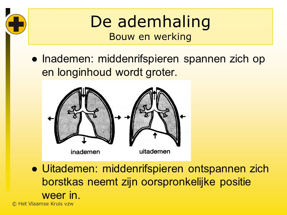 De ademhaling Bouw en werking