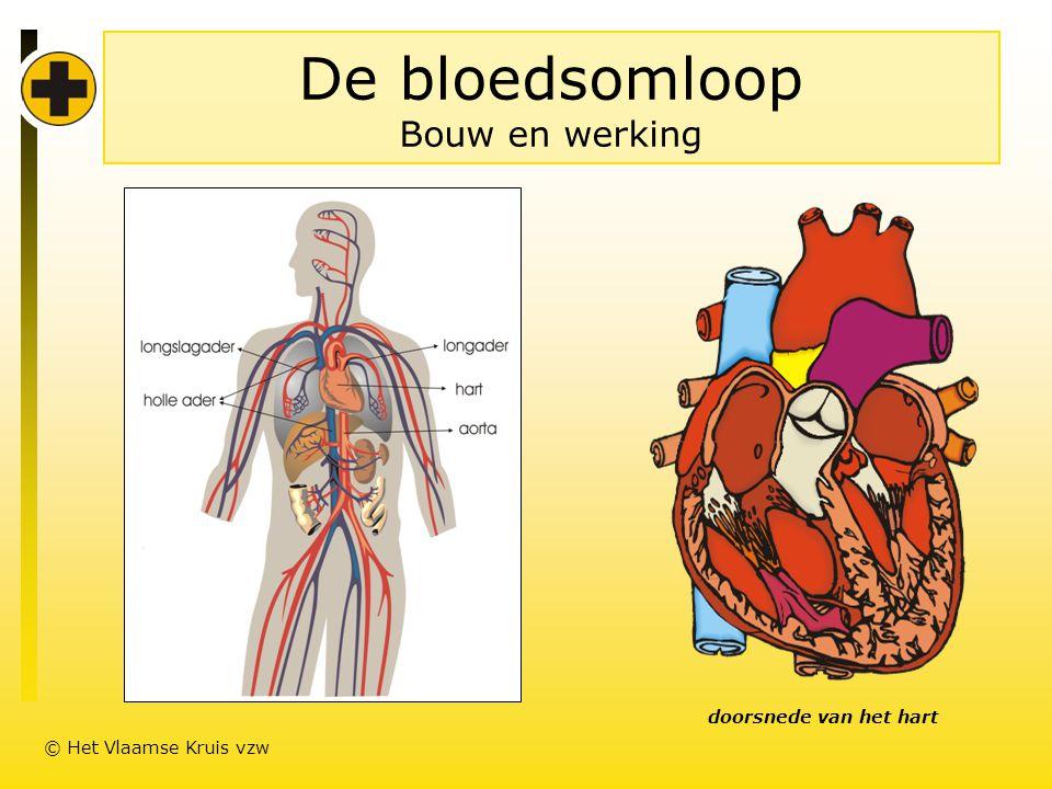 De bloedsomloop Bouw en werking