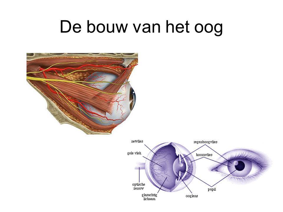 De bouw van het oog