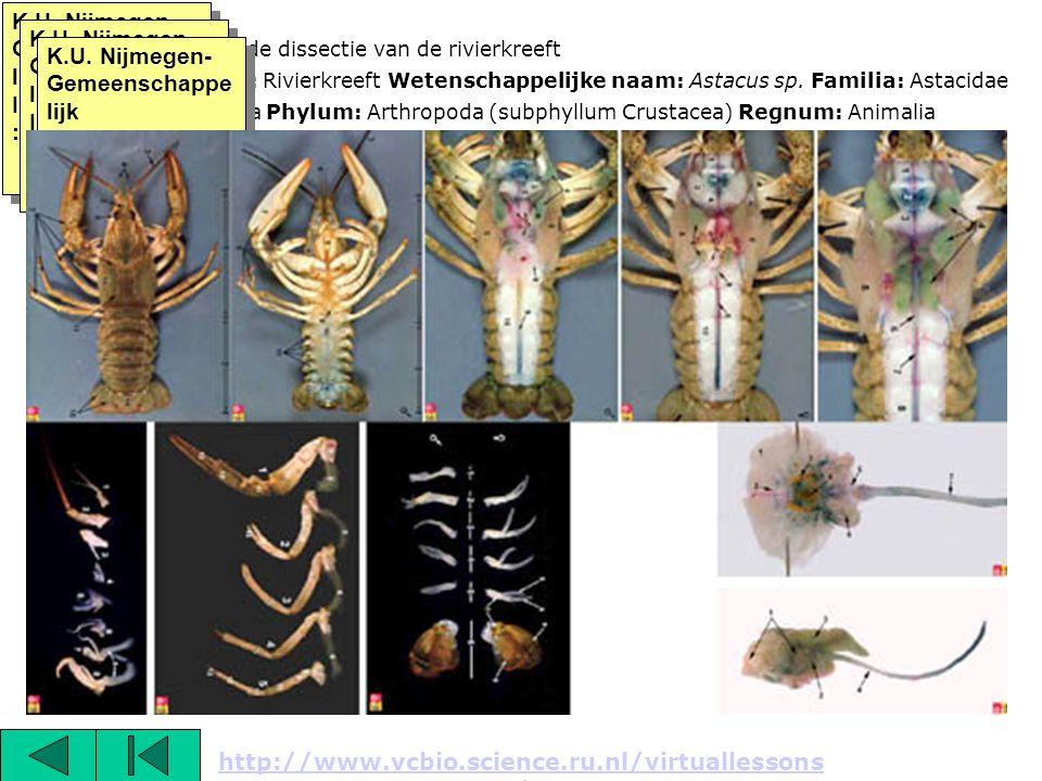 K.U. Nijmegen- Gemeenschappelijk Instrumentarium:
