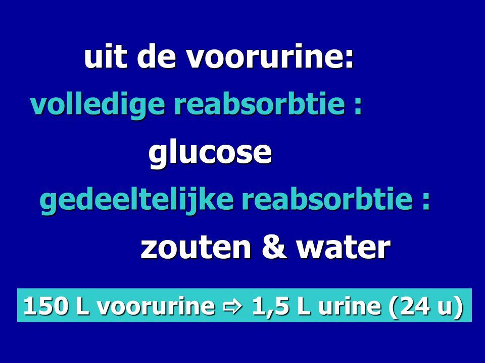 uit de voorurine: glucose zouten & water volledige reabsorbtie :