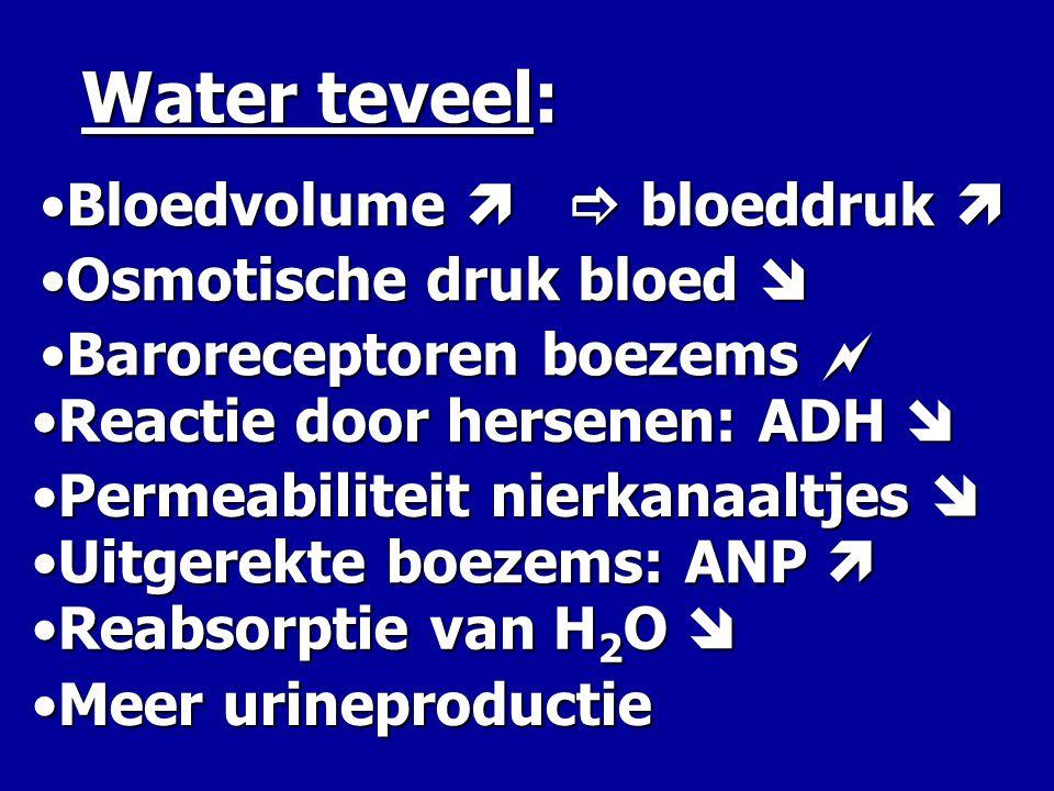 Water teveel: Bloedvolume   bloeddruk  Osmotische druk bloed 