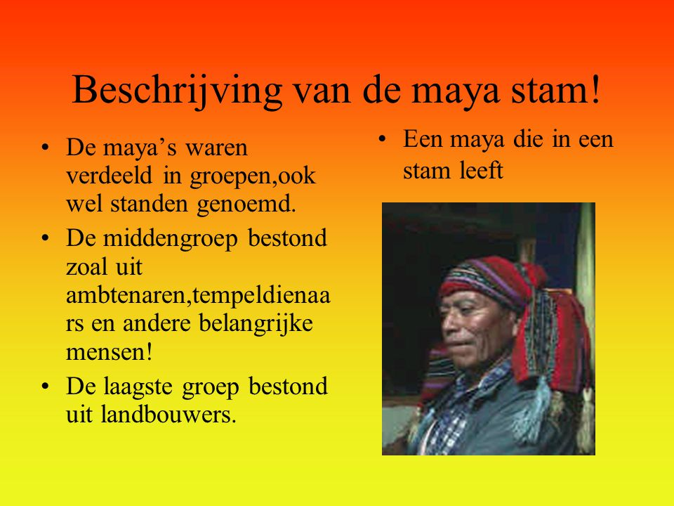 Beschrijving van de maya stam!