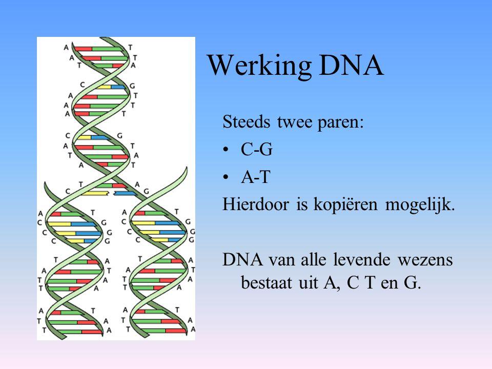 Werking DNA Steeds twee paren: C-G A-T Hierdoor is kopiëren mogelijk.