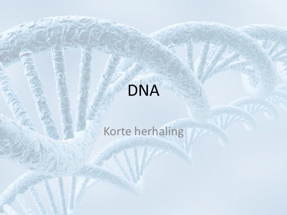 DNA Korte herhaling