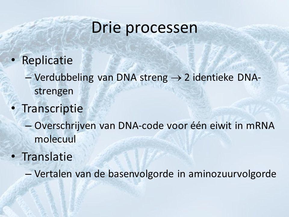 Drie processen Replicatie Transcriptie Translatie