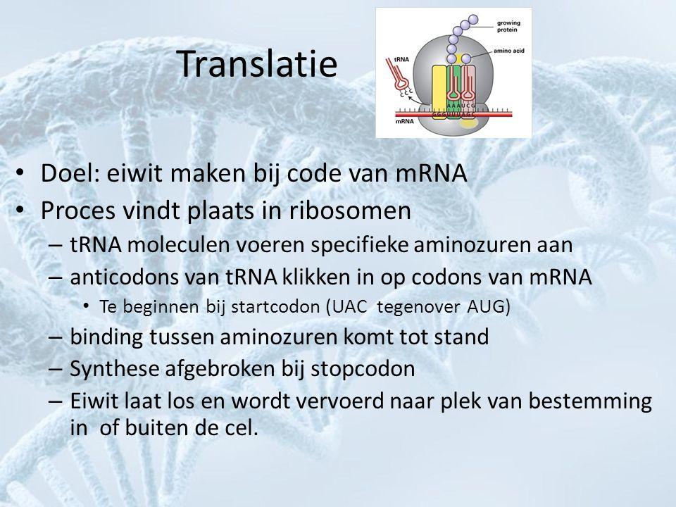 Translatie Doel: eiwit maken bij code van mRNA