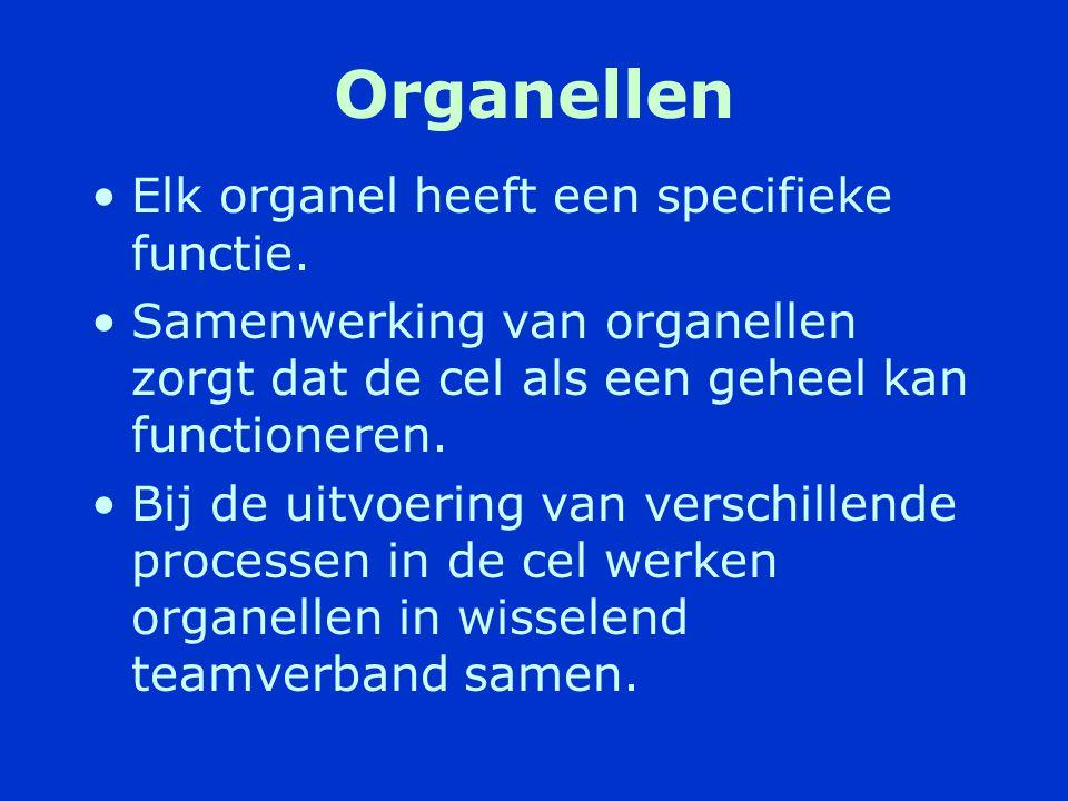 Organellen Elk organel heeft een specifieke functie.