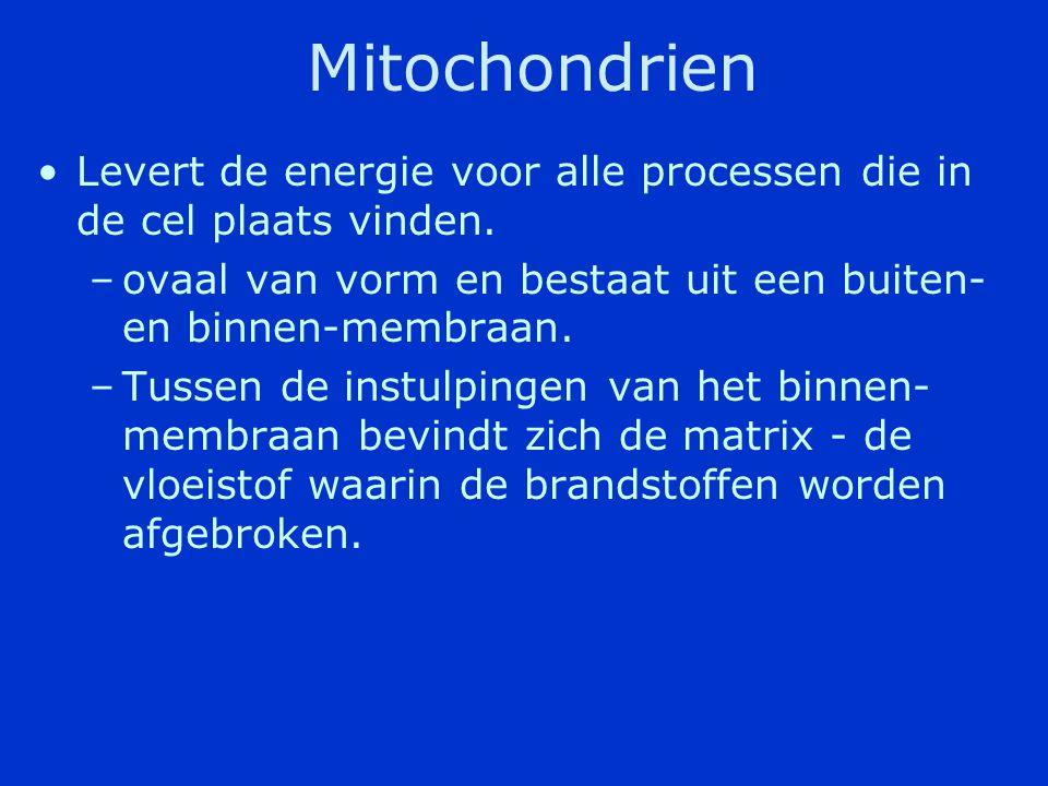 Mitochondrien Levert de energie voor alle processen die in de cel plaats vinden. ovaal van vorm en bestaat uit een buiten- en binnen-membraan.