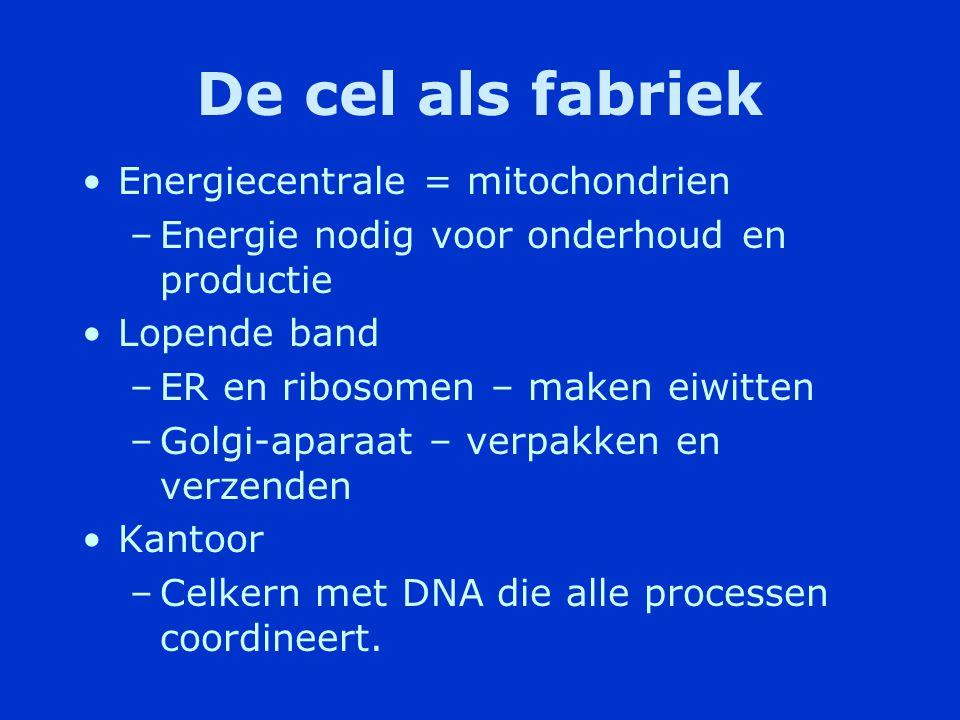 De cel als fabriek Energiecentrale = mitochondrien