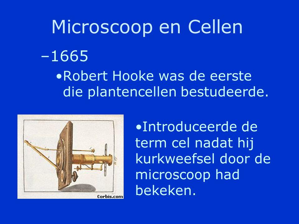 Microscoop en Cellen 1665. Robert Hooke was de eerste die plantencellen bestudeerde.