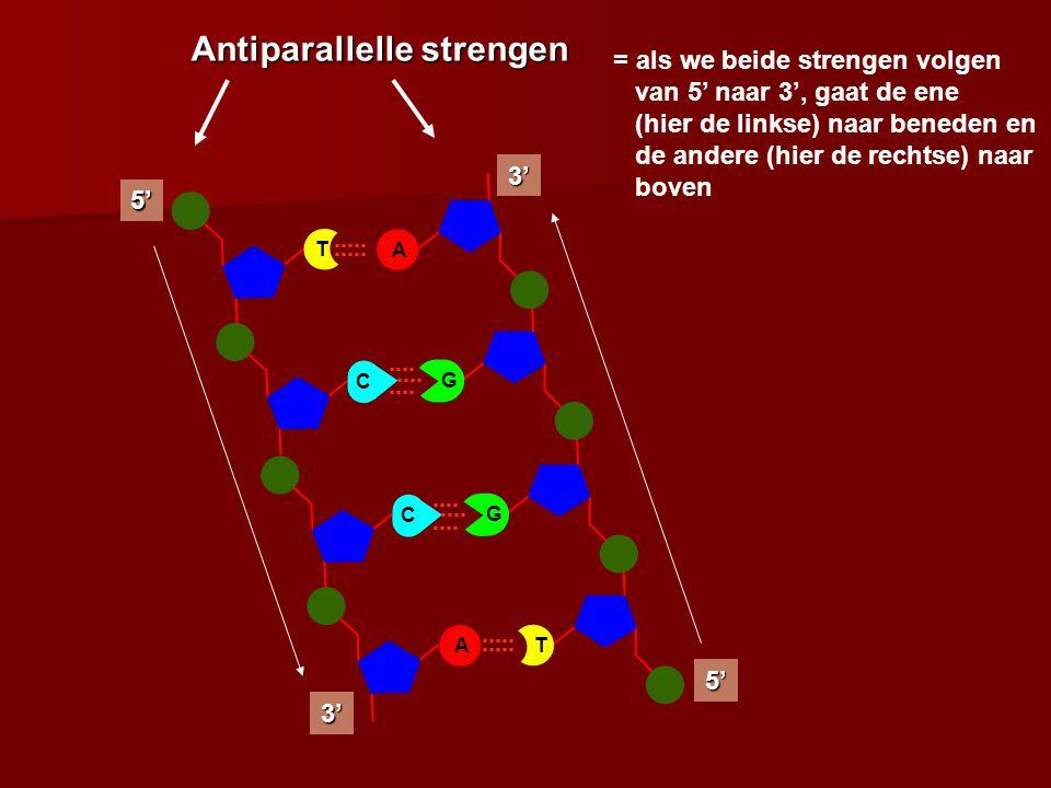 Antiparallelle strengen