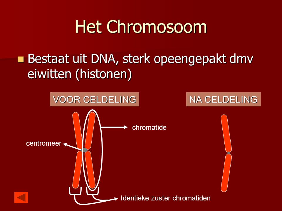 Het Chromosoom Bestaat uit DNA, sterk opeengepakt dmv eiwitten (histonen) VOOR CELDELING. NA CELDELING.