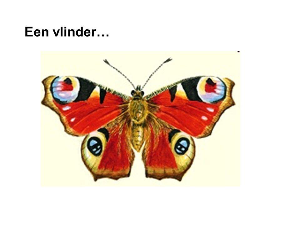 dia Een vlinder…
