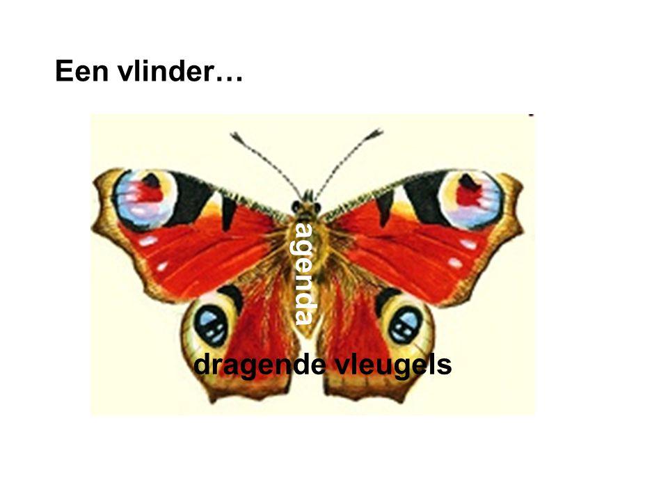 dia Een vlinder… dragende vleugels agenda