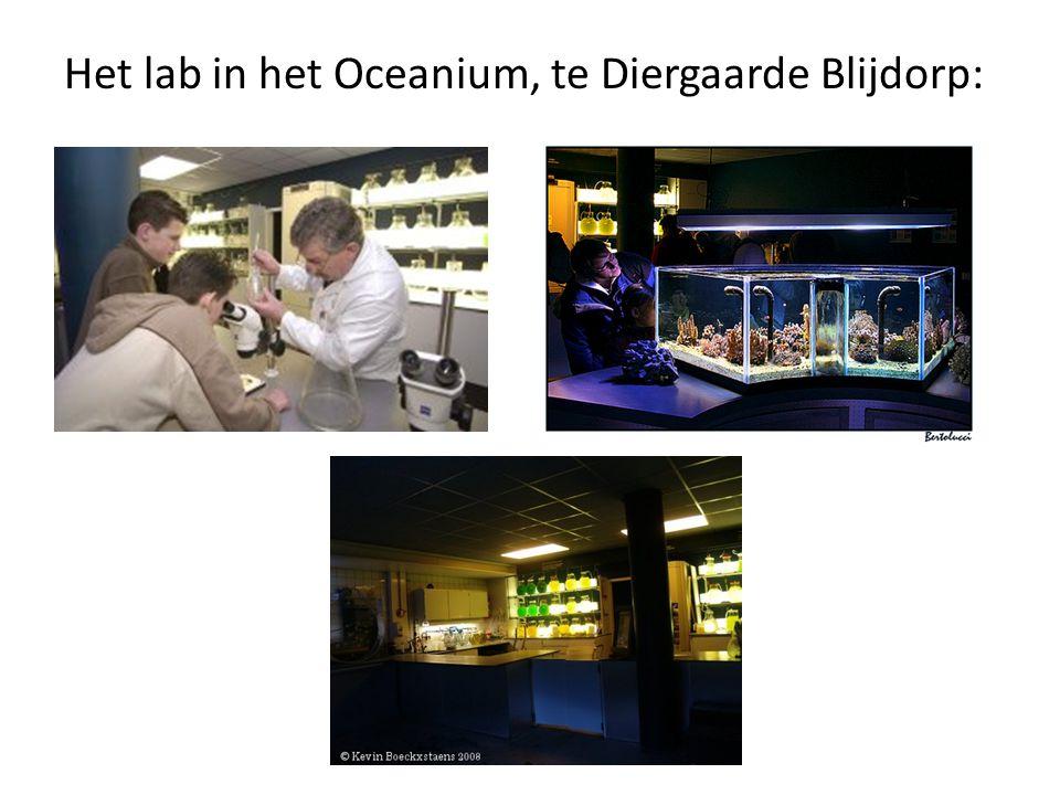 Het lab in het Oceanium, te Diergaarde Blijdorp: