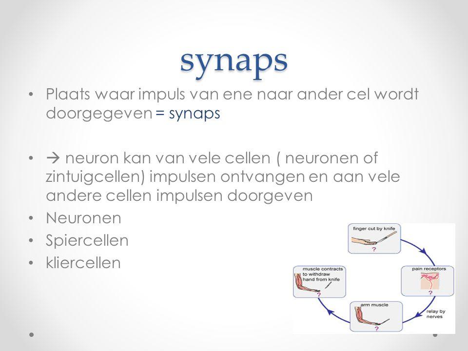 synaps Plaats waar impuls van ene naar ander cel wordt doorgegeven = synaps.