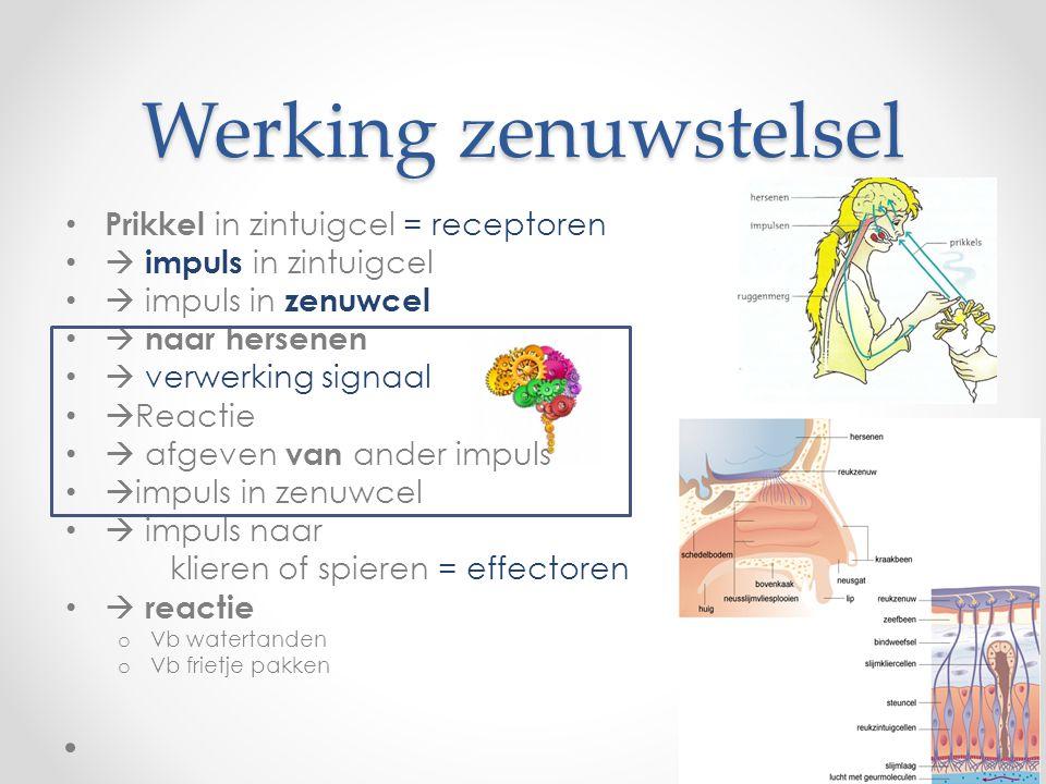 Werking zenuwstelsel Prikkel in zintuigcel = receptoren