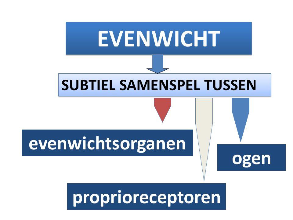EVENWICHT evenwichtsorganen ogen proprioreceptoren